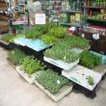 Plantas Horticolas